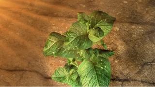 ปุจฉา-วิสัชนา ตอน พืชเลี้ยงตัวเองได้อย่างไร