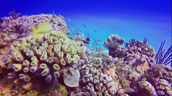 มหัศจรรย์โลกใต้ทะเล